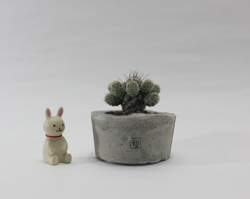 Small potted succulents - Flowers Mom, firm power