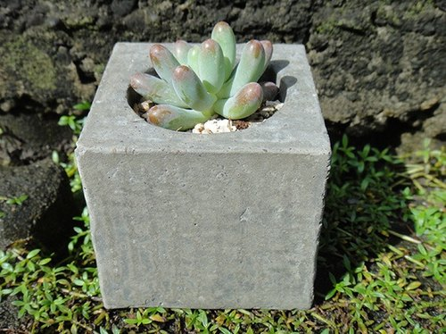 Square stone-cement basin is potted planting potted succulents