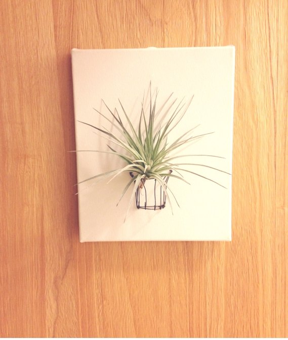 [Potted] Read the Air (Air pineapple) new home layout paintings gift graduation gift