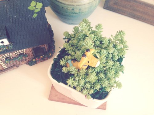 [Potted] hide and seek Hide and Seek (Succulents healing office small objects) gift graduation gift