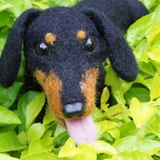 [Sheep wool felt music and more X] Short-haired dachshund pet engraved area Do not ask subscript!