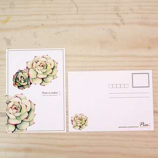 Succulents / postcard / Chihuahuas