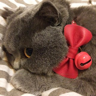 Zemoneni Leather pet collar Bow tie in Red color