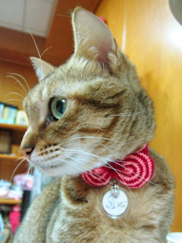 Circle striped bows. Cat collars