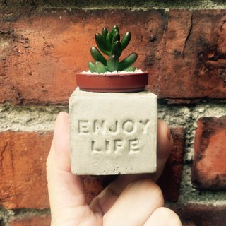 Enjoy Life ~ (enjoyment of life) magnet potted succulents