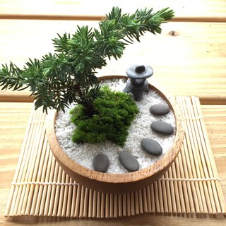 Pure natural Japanese Zen potted plants Zen dry pine trees potted gifts zen