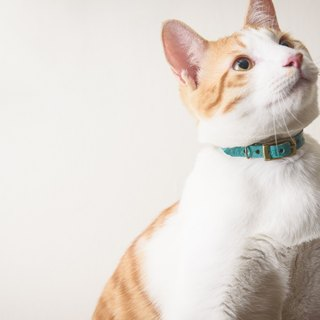 Hand-stained leather pet collar (for cats)