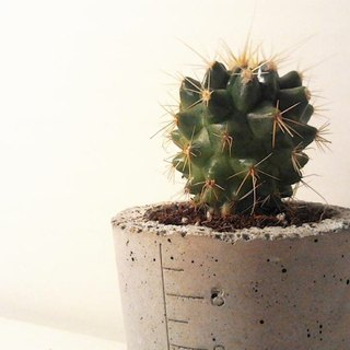 Potted cactus cup