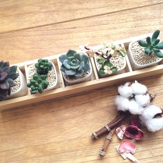 [Potted] Simple Life Simple Life (5 pieces with wooden box succulents) gift graduation gift