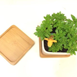 Bamboo coasters waterproof base