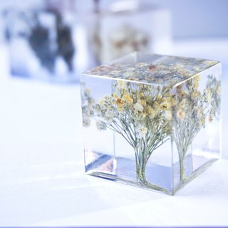 Starry - three-dimensional square dried flowers decoration