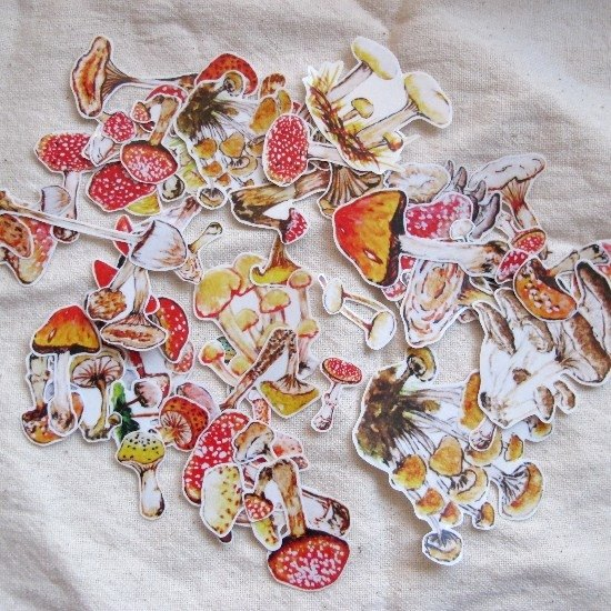 Forest mushroom stickers