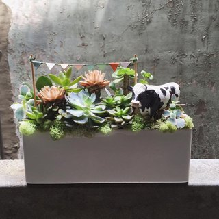 Meat Zoo congratulates potted plants