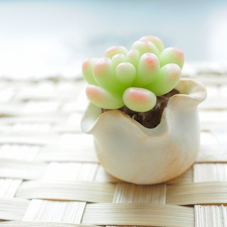 Sweet Dream ☆ mini clay bionic small pots succulents / Star Beauty