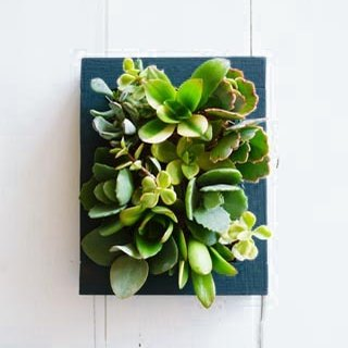 Succulents wooden photo frame series - Wizard of Oz