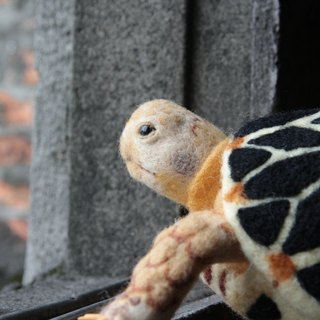 Sheep blankets pet - star tortoise