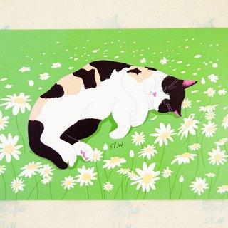Cat postcard on green