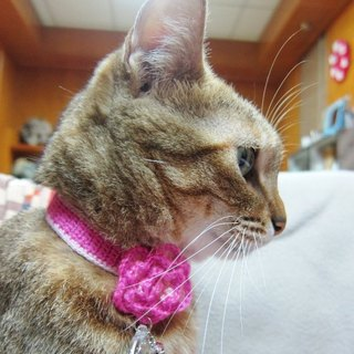 Rose wool cat collars