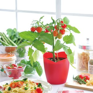 San Tao Tao Heartomato heart-shaped tomato potted plants