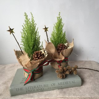 Christmas limited pine cone Christmas small tree fragrant crown cypress plant single sold