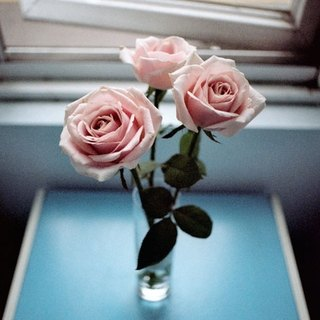 Film Photography Postcard - Light Series - Roses