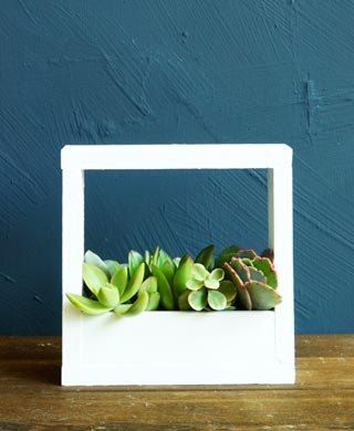 Succulents wooden box wood box potted series