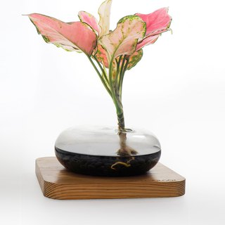 Greenology Glass Pot with Wooden Base