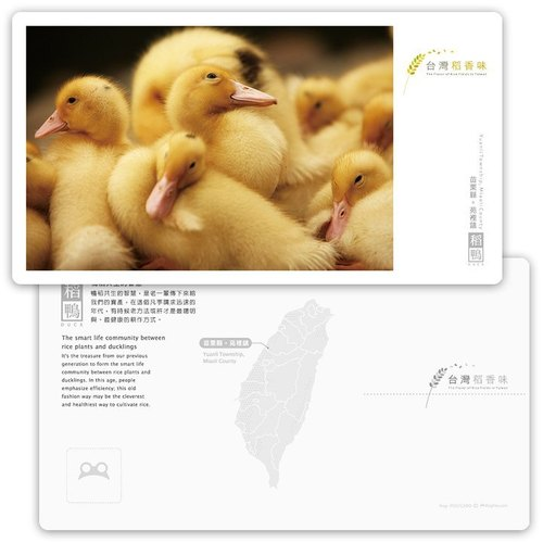 Taiwan rice fragrance postcard [rice duck series] - rice duck farming wisdom