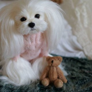 MINI'S SECRET ~ Customized wool felt imaginary engraved hair kids - Maltese show