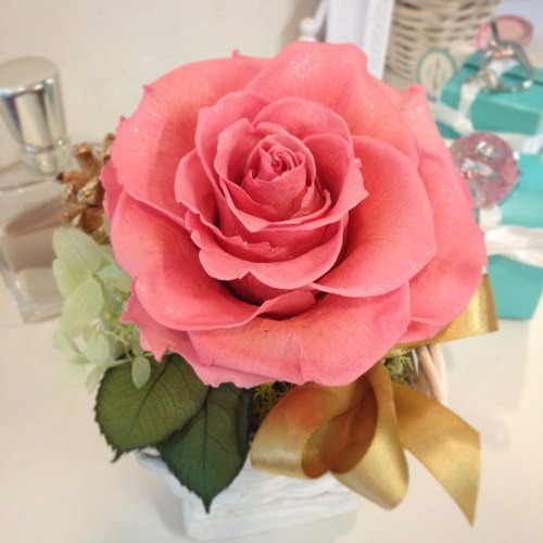 """The real diamond roses"" beautiful love rose pink amaranth flower pots"