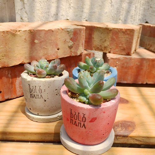Day round - baby finger - Succulents cement pot (including the base) to exchange gifts blessing bags