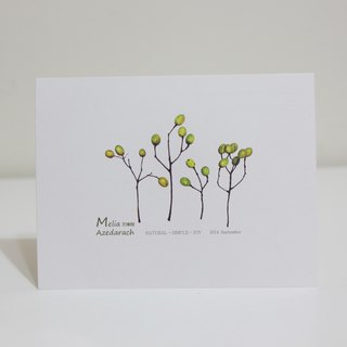 Gordon -NSJ hand-painted postcard Chinaberry Tree