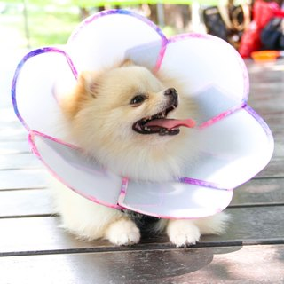 Petals Flowers pet anti-licking medical headgear [board] (Size XS)**Taiwan's new patented design**