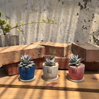 Tian Yuan - frost of the North - Succulents cement pot (including the base)