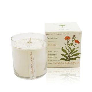[KOBO] American Soybean Essential Oil Candle - Fragrance Calendula (280g/combustible 60hr)
