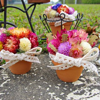 [Drunk Heart Potted Flower] Dry Flower Pot 4cm*4cm