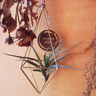 Geometrical and metal hanging pot with Tillandsia