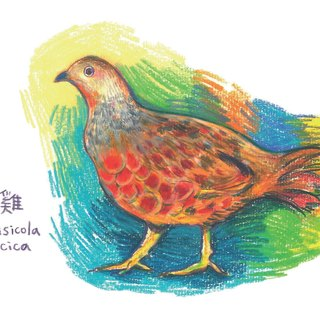 Bamboo chicken painted postcards