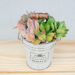 Peas succulents and small groceries - rustic vintage iron barrel planting combination