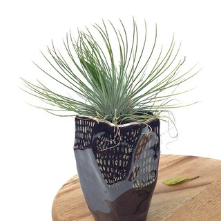 Small ceramic plant pot for cactus , handmade pottery , small pot , black pot