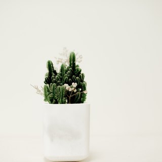 Shenlou [square pattern] generous clay pot cactus & cement pot | DIY & dry flowers