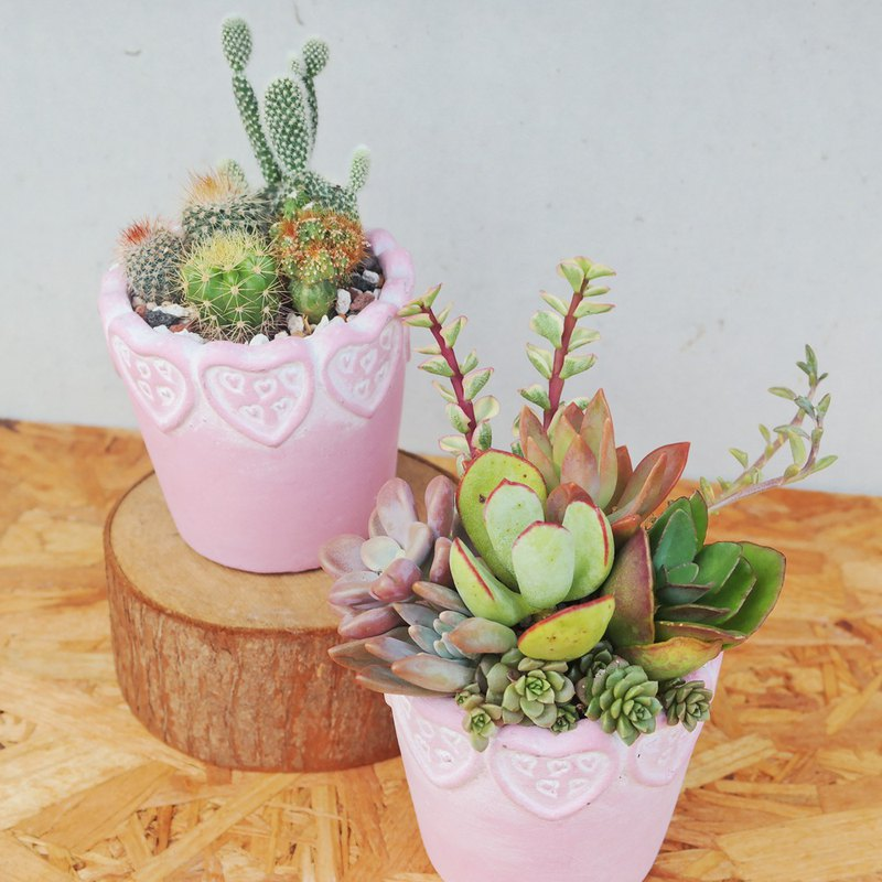 荳荳多肉植物與小雜貨-粉色愛心泥盆植栽組合