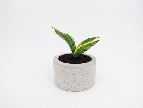 [Circular Basin] Cement Flower/Cement Pot/Cement Pot/Cement Plant/Concrete Pot (Without plant. Stone. Soil)