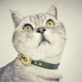 Zemoneni Leather pet collar Bow tie in Golden color