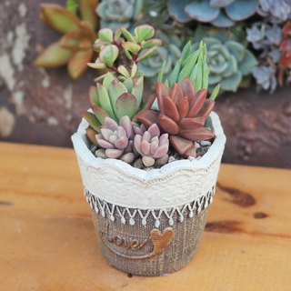 Peas succulents and small groceries - cute Polly series planting group