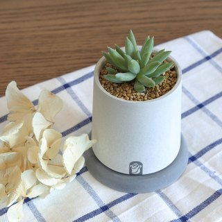 Tower Succulents Cactus cement hand-made plants containing plants / leaves jade decoration