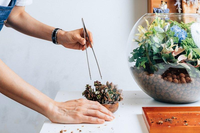 4-6月│多肉木器小品 基礎植栽體驗課 Succulent Terrarium