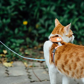 Tail with me】 【classic nylon rope cat rope cats series sky blue sky