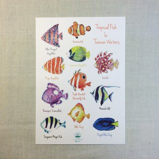 Tropical fish essay postcard