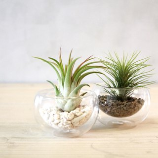 Air Pineapple Glass Plantlets 2 Insets / Ornaments / Plants